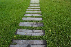 jual rumput taman jogja